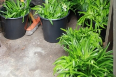 Gardeners 0414 iv